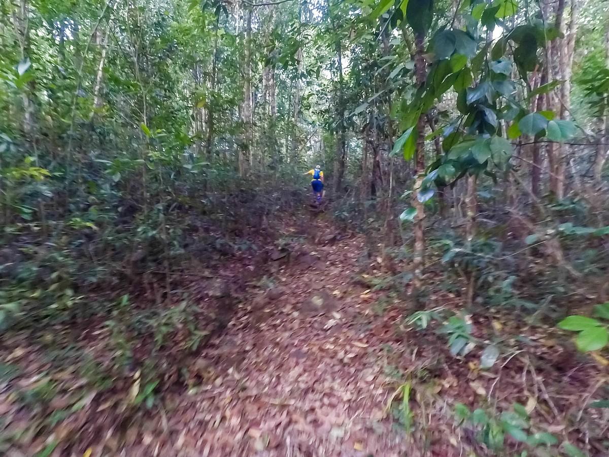 Утро в джунглях