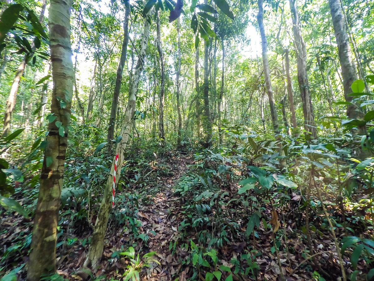Трейл по джунглям